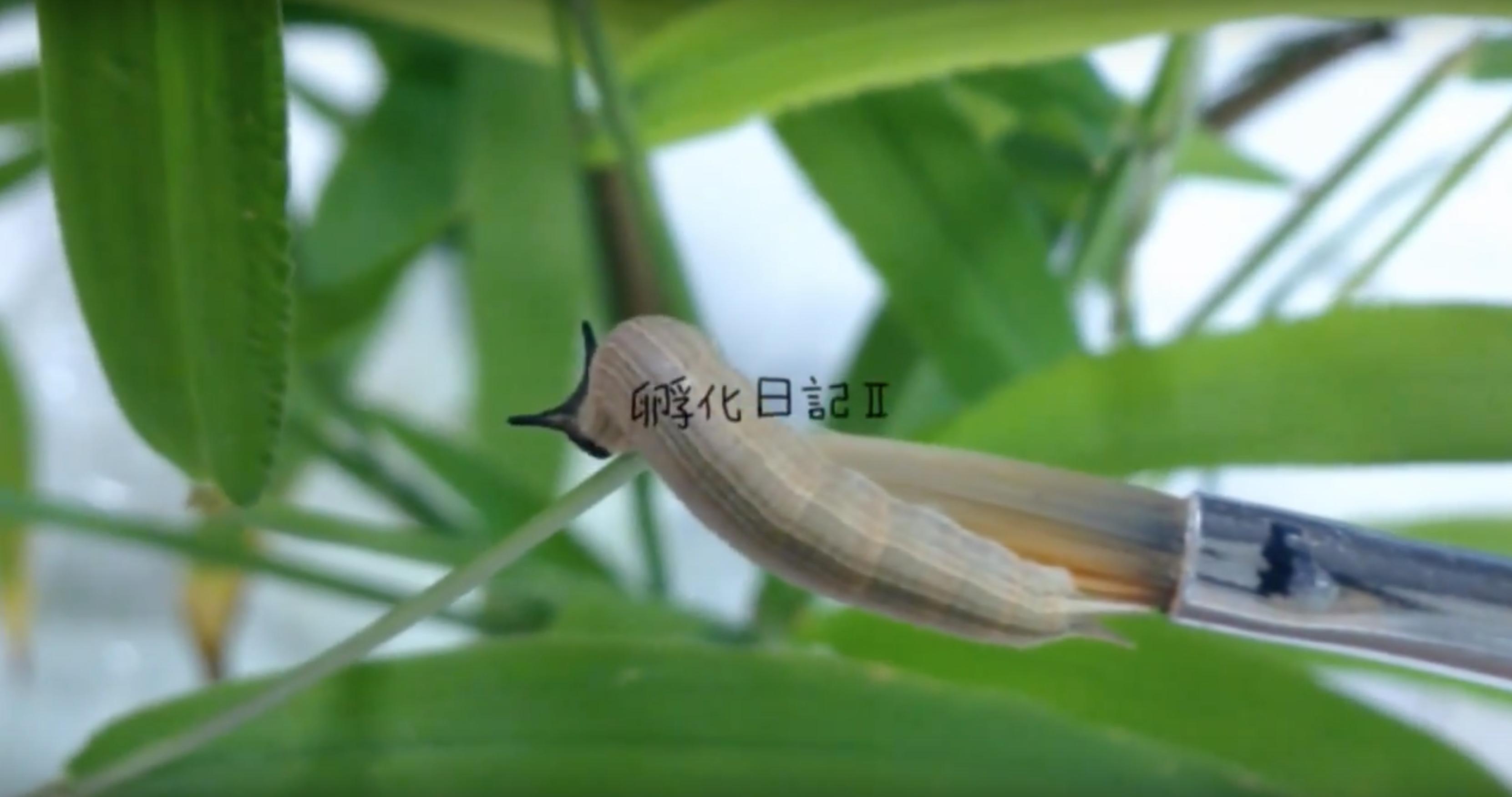 青柳菜摘《孵化日記Ⅱ》
